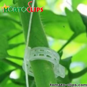 Agricultural raffia attached to a tomato clip