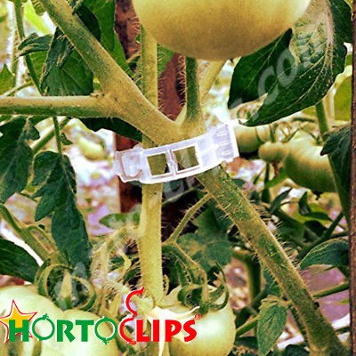 Clips used in the tomato plant.