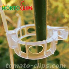 Clips used for the tutoring of the tomato plant.